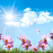 Pink cosmos against a blue sky - Stock Photo