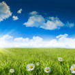 Wild daisies in the grass with sky — Stock Photo