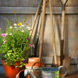 Garden tools and flowers in shed — Stockfoto