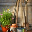 Garden tools and flowers in shed — Stock Photo