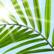 Palm leaf against a sunny sky - Photo