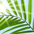 Palm leaf against a sunny sky - Stock Photo