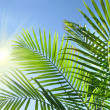 Palm branches in the summer sun - Stok fotoğraf