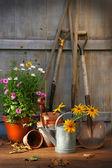 Abri de jardin avec outils et pots — Photo