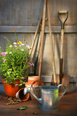 Garden tools and flowers in shed — Photo
