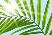 Palm leaf against a sunny sky — Stock Photo