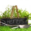 Garden box with assortment of herbs and tools - Stock Photo