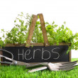 Garden box with assortment of herbs and tools - Stok fotoğraf