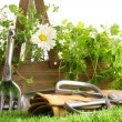 Fresh herbs in wooden box with tools — Stockfoto