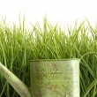 Small watering can with tall grass against white — Stock Photo