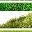 Assortment of different grass on white — Stock fotografie