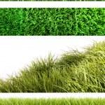 surtido de hierbas diferentes en blanco — Foto de Stock