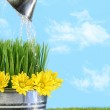 Watering flowers and grass for spring — Stock Photo