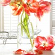 Beautiful tulips in old milk bottle — Stock fotografie