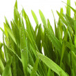 wheatgrass against a white — Stock Photo