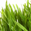Wheatgrass against a white - Photo