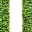 Over view of grass on white background — Stock Photo