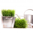 Watering can with grass and tools — Stock Photo