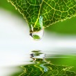 Leaf droplet over water — Stock Photo