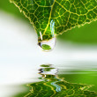 Stock Photo: Leaf droplet over water