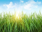 Tall wet grass against a white — Stock Photo