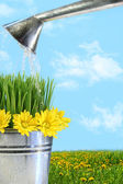 Watering flowers and grass for spring — Stok fotoğraf