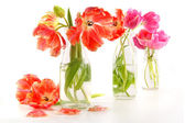 Colorful spring tulips in old milk bottles — Stock Photo