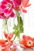 Spring tulips in old milk bottles — Stock Photo