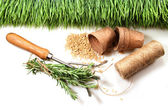 Grass, seeds, cord and peat pots for spring — Stock Photo