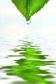 Green leaf over water reflection — Stock Photo
