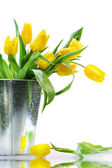 Yellow spring tulips — 图库照片