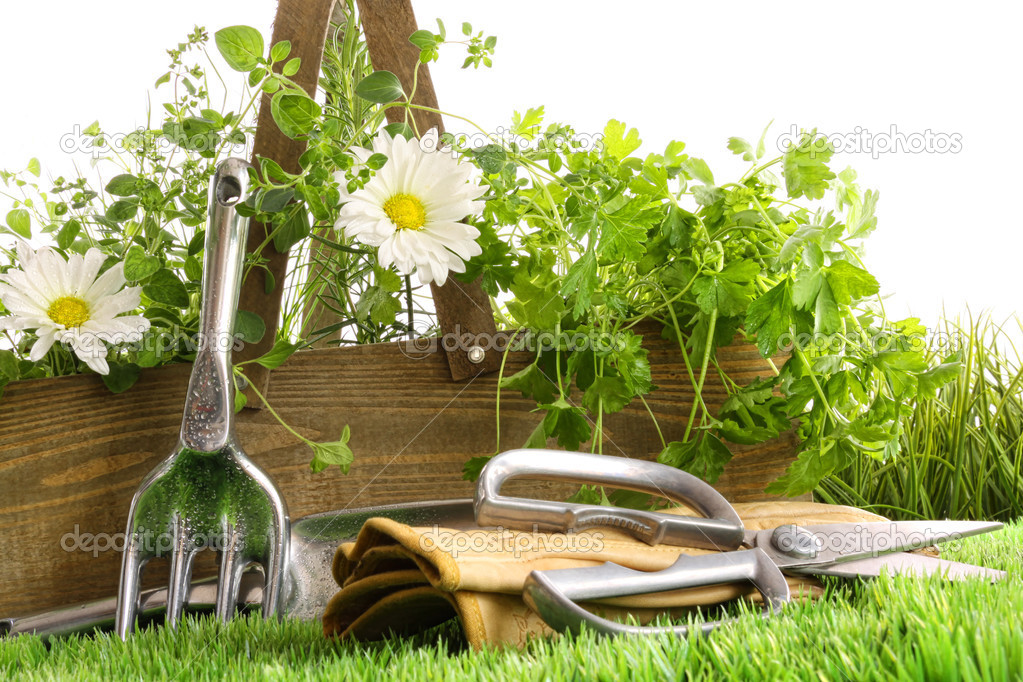Fresh herbs in wooden box with garden tools — Stock Photo #3250342