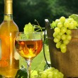 White wine with bottle and grapes — Stock Photo
