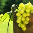 Grapes in wine bucket - Stock Photo