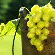 Grapes in wine bucket - Stockfoto