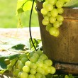 Green grapes and leaves - Stock Photo