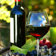 Stock Photo: Glass of red wine with bottle and grapes against foliage