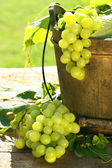 Green grapes and leaves — Stockfoto