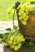 Groene druiven en bladeren — Stockfoto