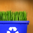 Blue recycle bin met gras binnen — Stockfoto
