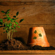 Close-up of young plant  with flower pot - Stock Photo