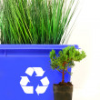 Tall grass inside recycle bin - Stockfoto