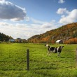 Autumn grazing - Stock Photo