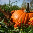 Pumpkins in the grass - Stock Photo