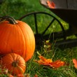 Stock Photo: Pumpkins in grass ready for halloween