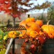 Foto de Stock  : Rake and pumpkins