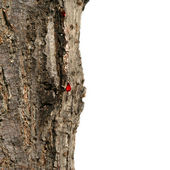 Close-up of blood dripping from tree — Stock Photo