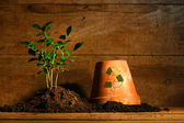 Close-up of young plant with flower pot — Stock Photo