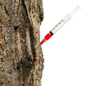 Syringe inserted into tree trunk on white — Stock Photo