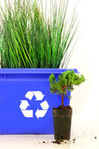Tall grass inside recycle bin — Stock Photo